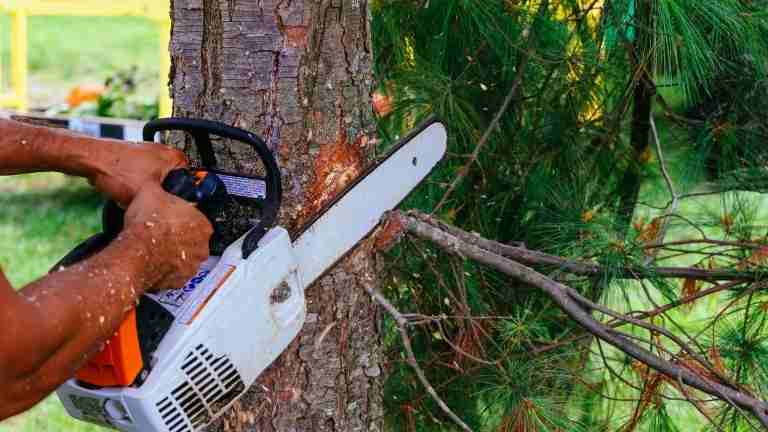 best 20 inch chainsaw reviews