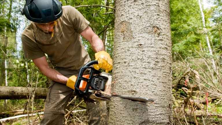best small gas chainsaw reviews